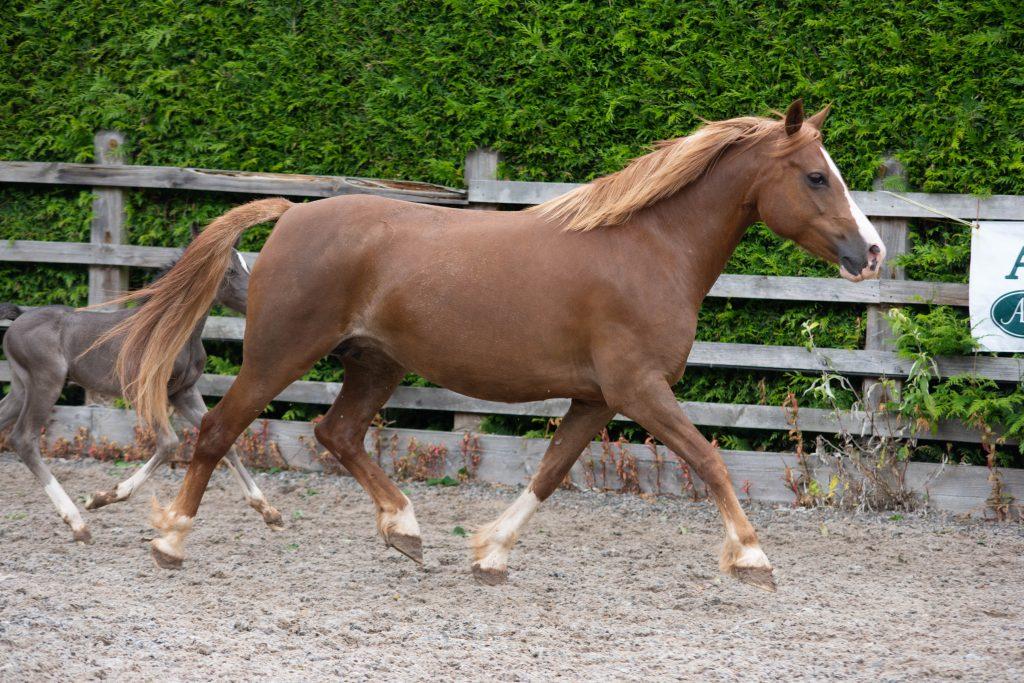 Fourseasons stud mares